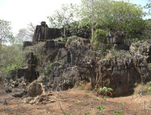 Scadoxus multiflos Chony Rock